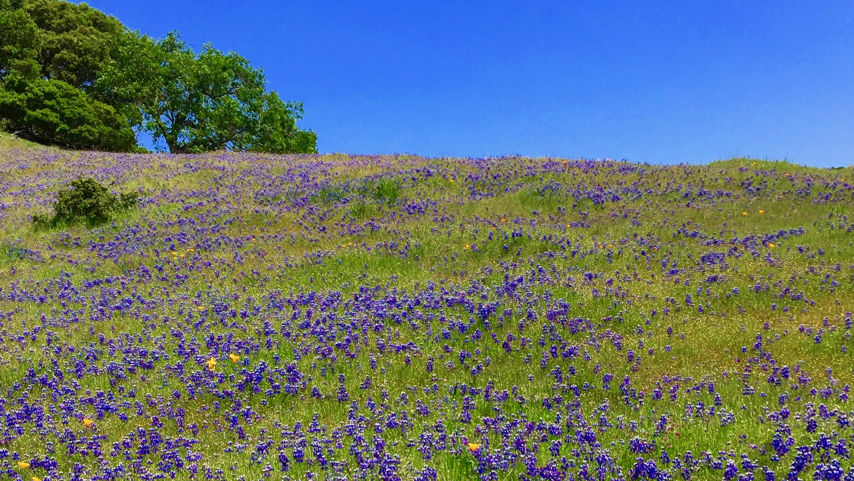 Best Bay Area Walks Wildflowers And Waterfalls